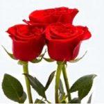К чему согласно толкователю снятся красные розы