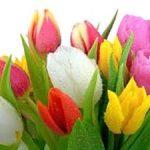 К чему согласно толкователю снятся тюльпаны