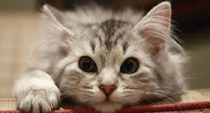 Снится кот