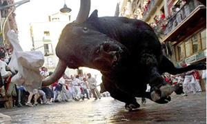 Агрессивный бык