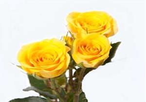 Снятся жёлтые цветы