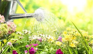Снится поливать цветы