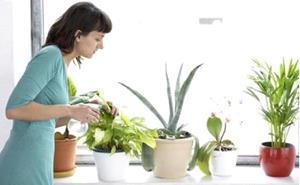Поливать комнатные цветы
