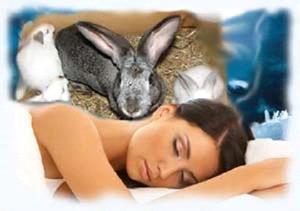 Заяц во сне