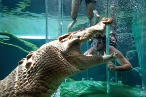 Плавание с крокодилом