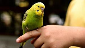 Попугай на руке