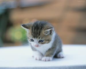 Безобидный котёнок