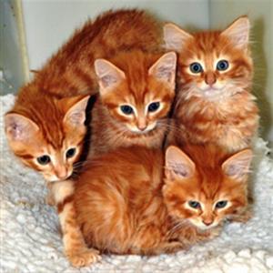 Кошки и коты