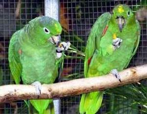 Птицы в клетке