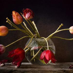 Увядающие тюльпаны