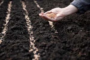 Сеять семена